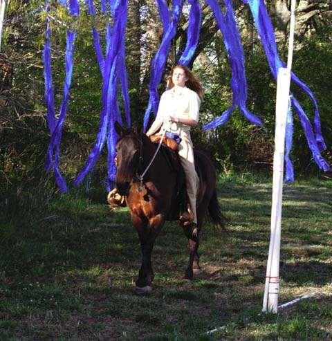 Plastic hanging streamers develop horse confidence to calmly pass through hanging obstacles. Develops trust in rider leader.
