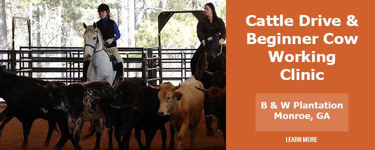 Cattle Drive and Beginner Cow Working Clinic
