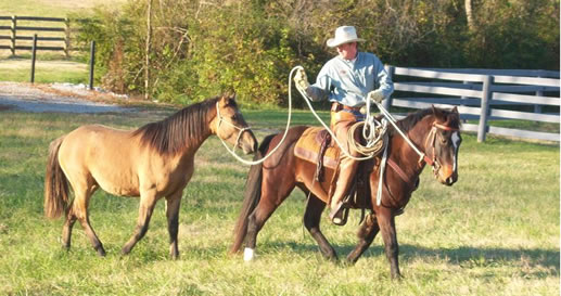Ed Dabney Horse Training