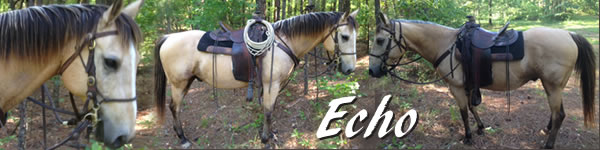 Horse for sale Echo